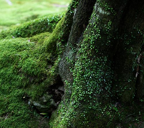木の強さと寿命